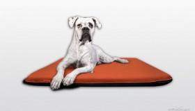Vybíráme ideální pelíšek pro psa